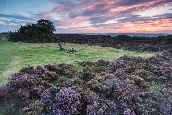 Stanton Moor Leaning Tree by jamesgrant