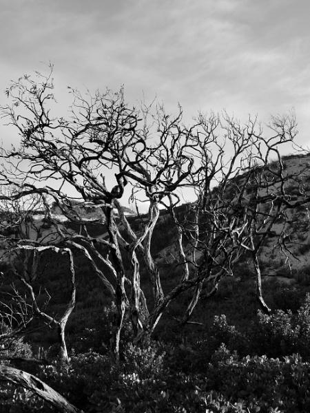 Wild Wild Woods by adrianbuttonphotography