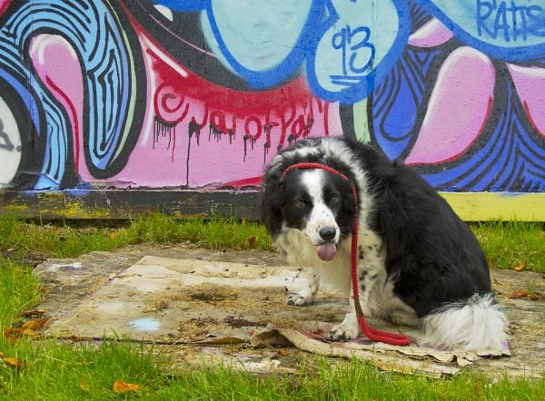 Graffiti Dog by peaceshooter