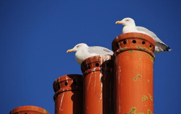 Gulls by Paulspix