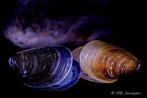 Mussels by HBJ