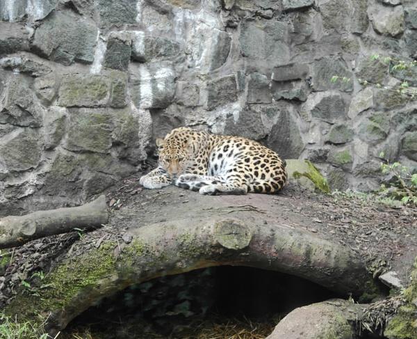 Edinburgh Zoo by s2005b