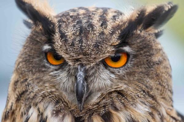 Eye to eye by elowes