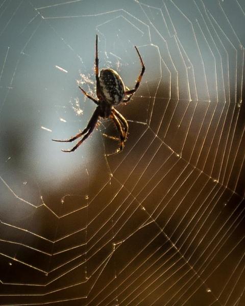 Spider by ssnidey