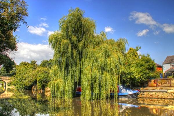 Still hiding under the Willows by jakrabbit