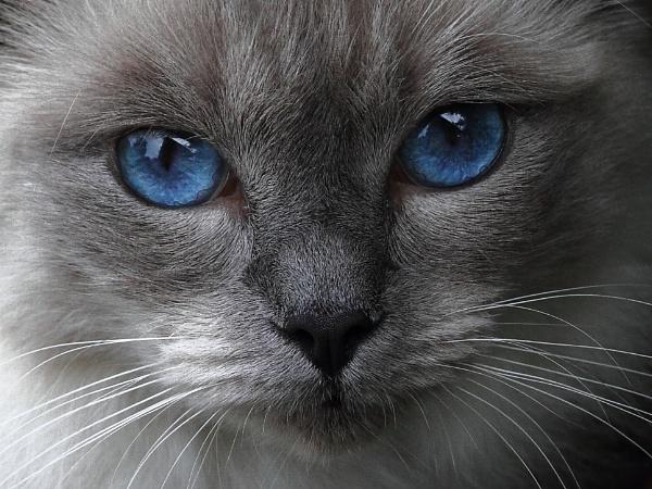 Blue eyes by Adamzy