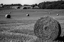 Harvest home in mono