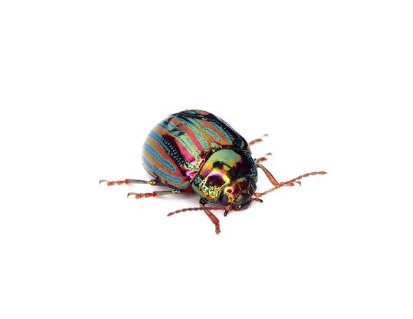 Bug by victorburnside
