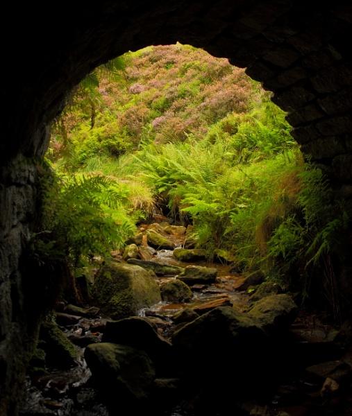 under the bridge by c40uk