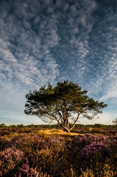 Dunwich Heath by StuartAt