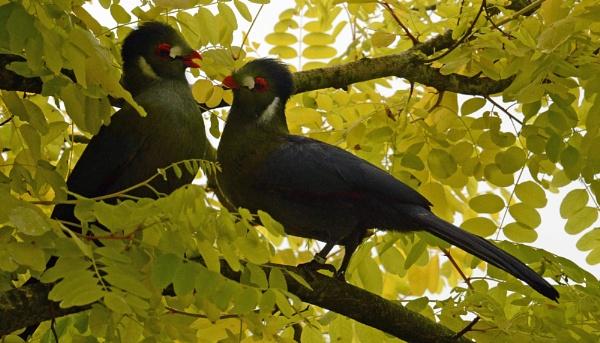 Lovebirds by MikeRC
