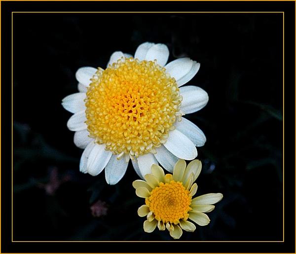 Tiny Flowers by DolphinLady