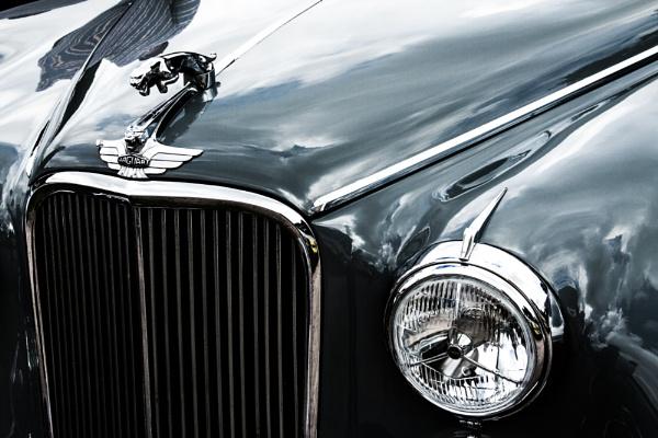 Jaguar by morpheus1955