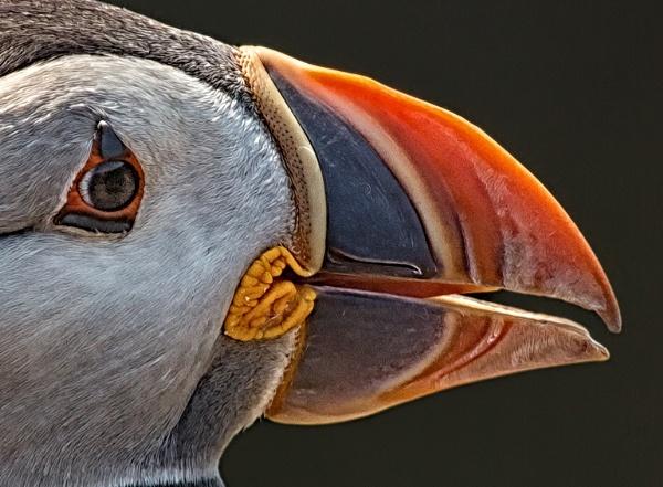 the beak by lesterlester