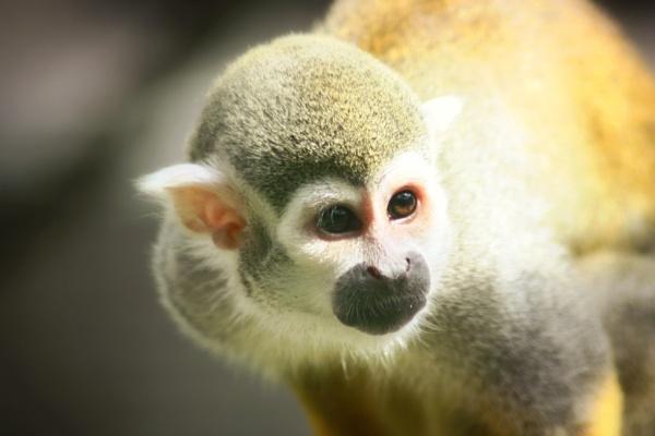 Monkey by kdeans