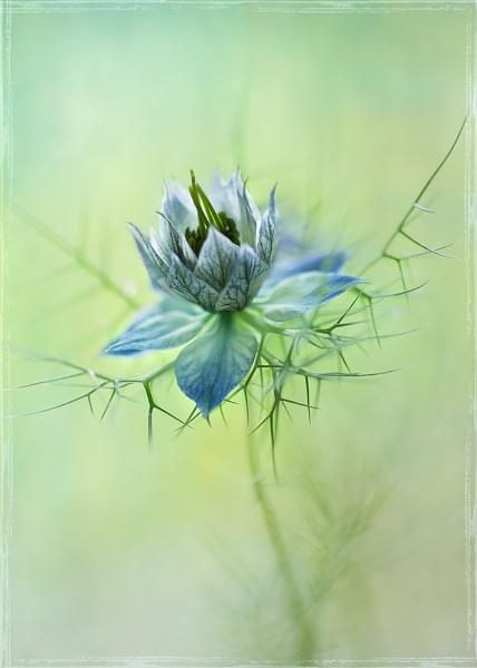 love is blue by JanieB43