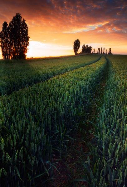 Wheat Field, South Darenth. by derekhansen