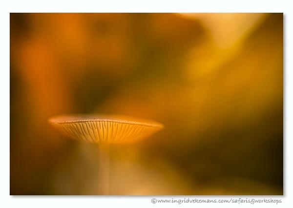 Autmn Light by IngridVekemans