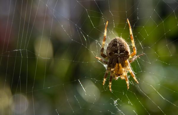 Spider in the garden by rahulzerg