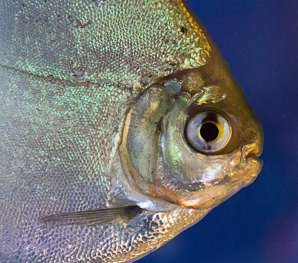 Fisheye by thelooneybishop