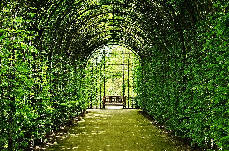 Avenue of serenity