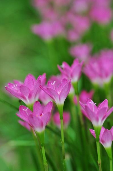 Flower by arindomb