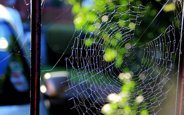 Web of Lights by Shucky