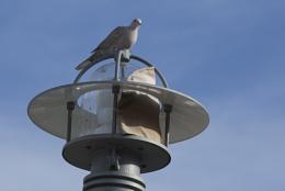 Bird - Please help identify