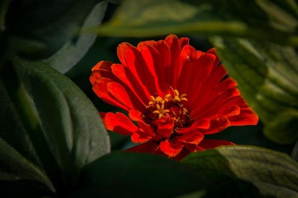 Flower by ssnidey