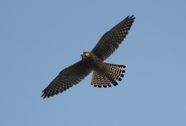 Flying high by loobylyn