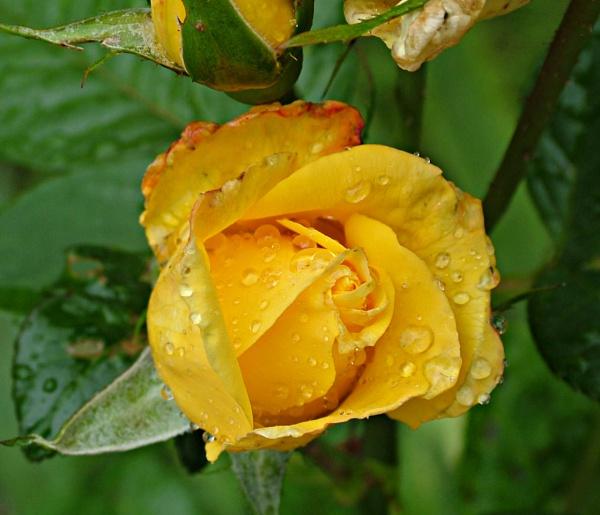 Sunshine in rain by MidnightMaya