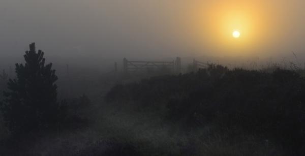 Morning Mist 3 by kojak