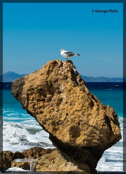 Mediterranean Seagull by GeorgePlatis