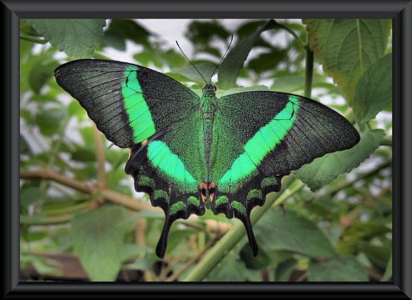 butterflyworld...isle of wight by uzi35mm