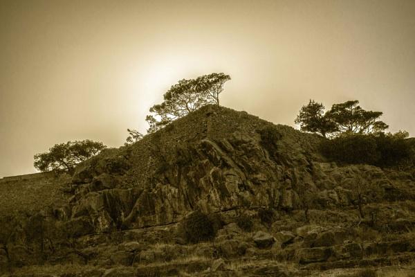 Three trees by derrymaine