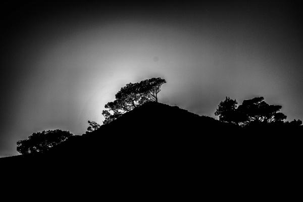 Three trees (2) by derrymaine