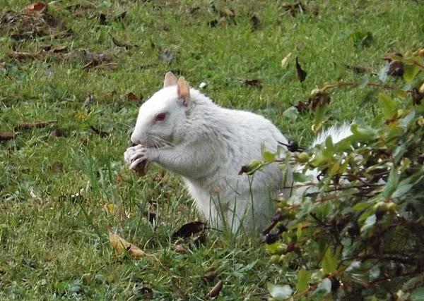 My little friend returns by Mollycat