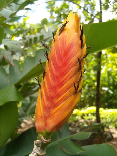 Tropical garden by lazgal