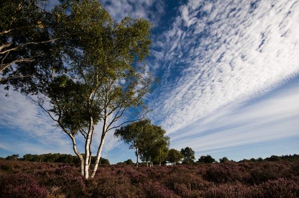Westleton Heath by StuartAt