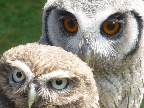 \'Owl you need is Love\' by sakisuki