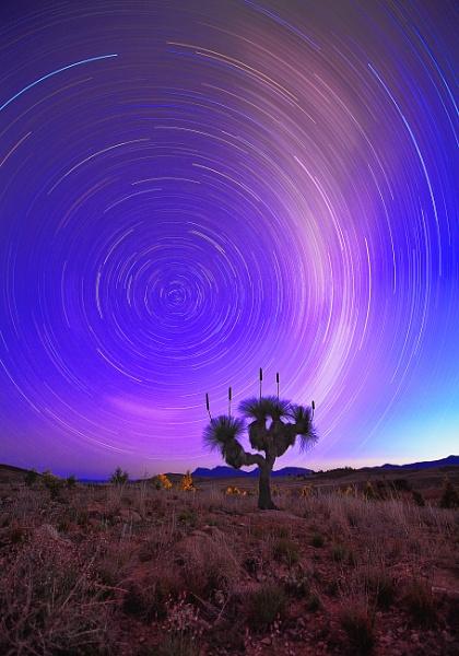 Star trails over Grass Tree-Flinders Ranges by STOCKSHOTS4U