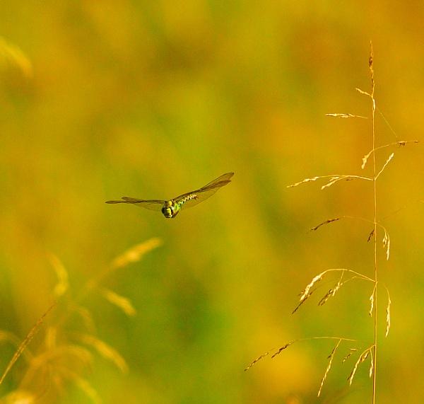 FLY BYE by Nicksi