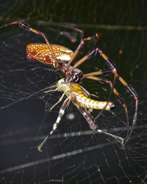 Spider vs Grasshopper by wsteffey