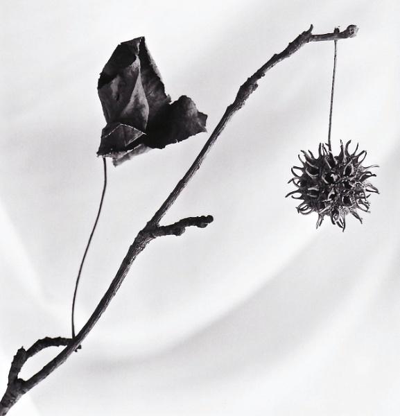 dead things by grache