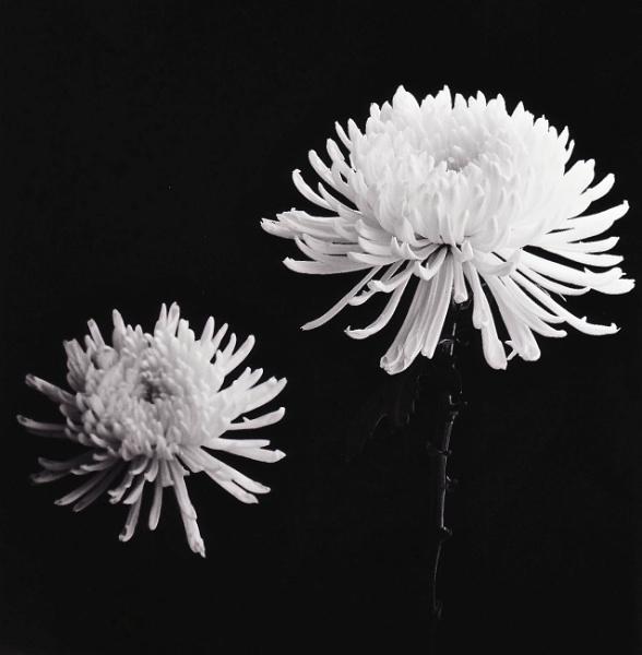 flowers by grache