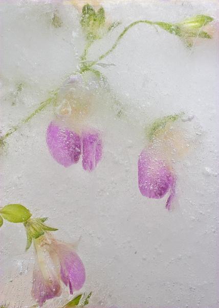 iced gems by JanieB43
