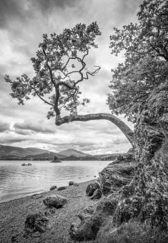 Tree from rock, Derwentwater