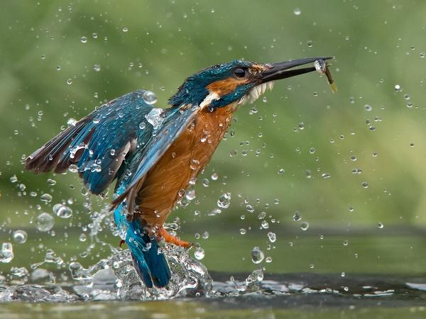 A big splash for a little catch by Jamie_MacArthur