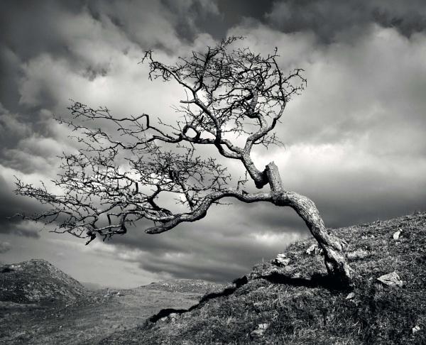 Hawthon Tree by jacks59