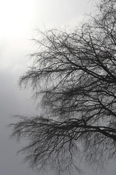 Autumn mist by Glen-W